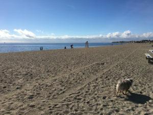 Jennings Dog Beach Fairfield County