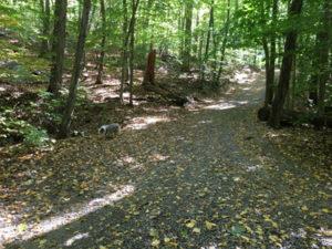 mianus-trail