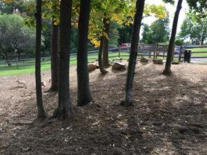 ridgefield-trees
